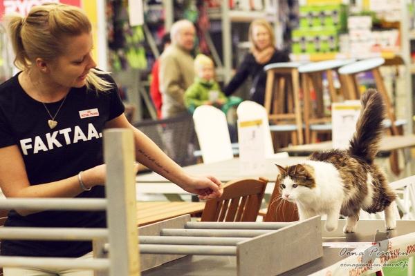 kissan kouluttaminen