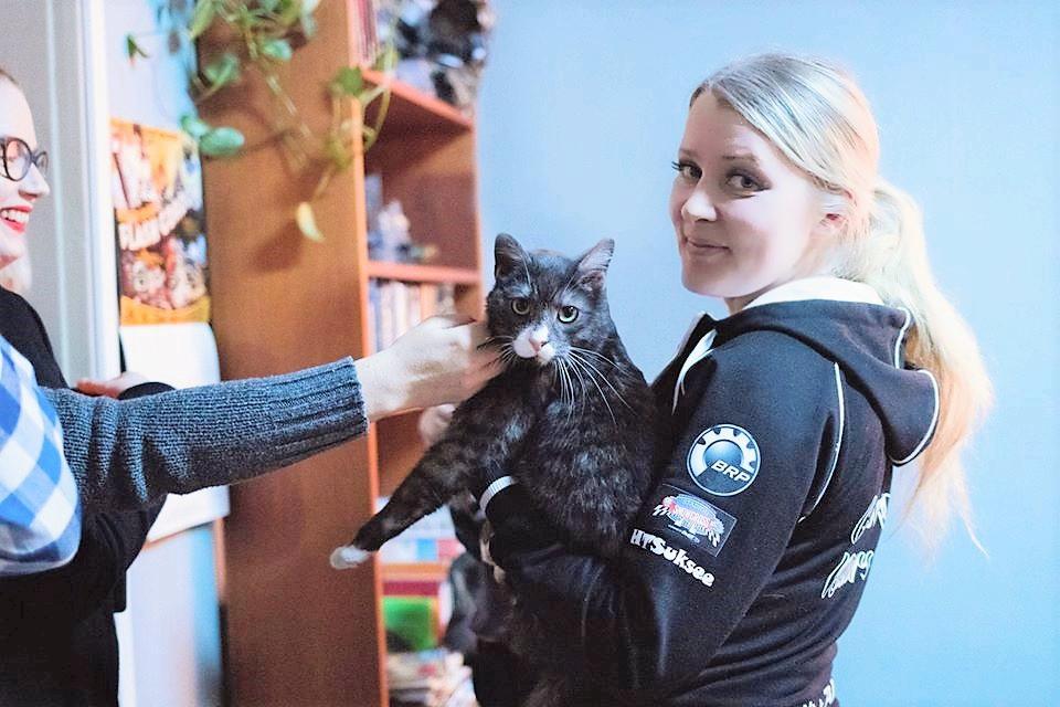 Kissan kouluttaminen sekä Kissa-agility