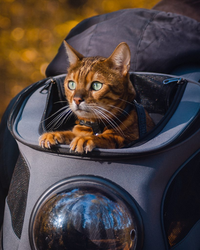 Kissan ulkoilu