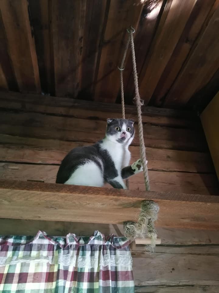 Kissa hotelli Hyrinässä on hauskaa