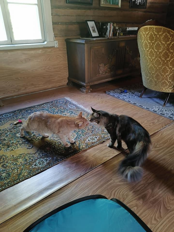 Kissahotellissa voidaan löytää ystäviä