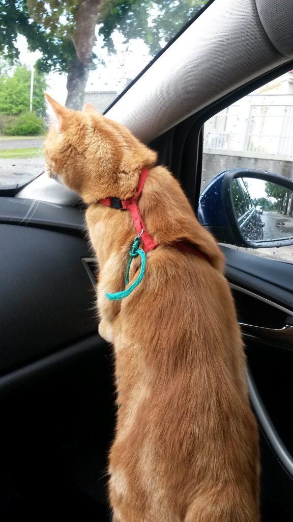 autoileva kissa