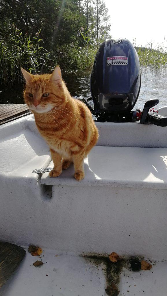 kissan kanssa veneellä