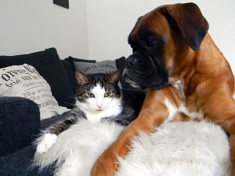 kissan ja koiran ystävyys