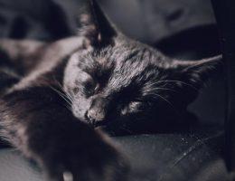 Miten kissa osoittaa rakkauttaan