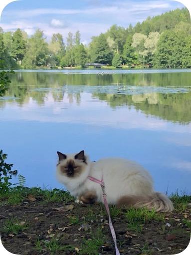 Valjaissa kulkeva kissa