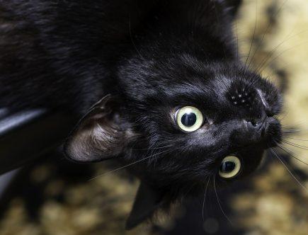 kissan turkin hoito