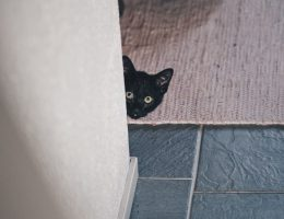 kissavakuutus