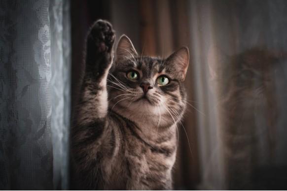Kissan valokuvaus