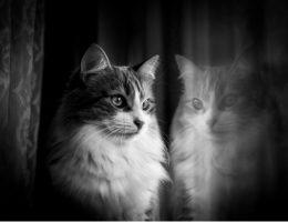Kissojen valokuvaus