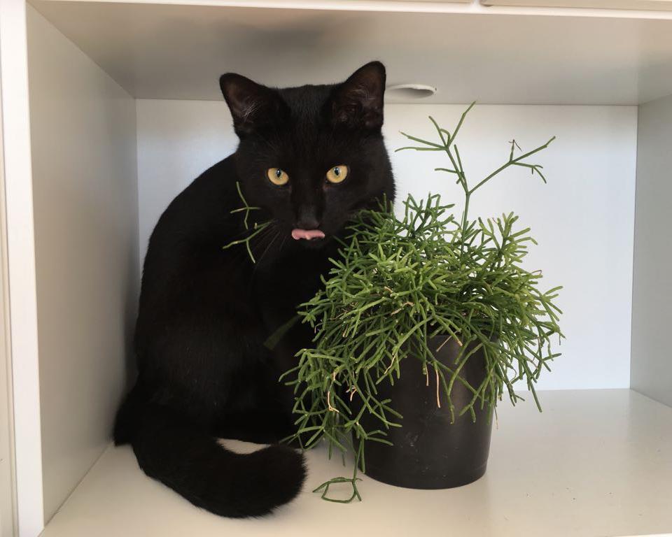 Kissoille myrkyllisiä kasveja