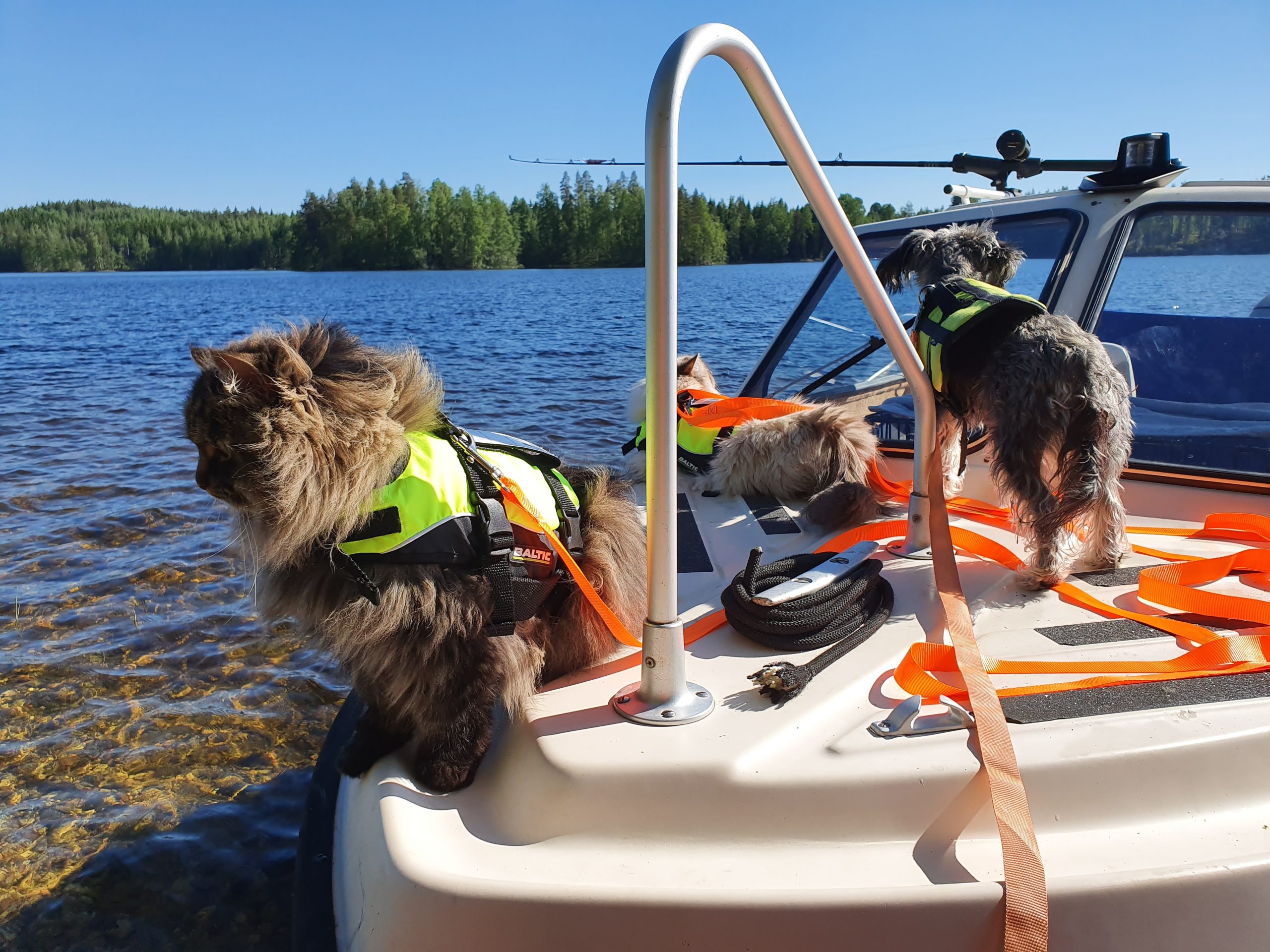 Kissojen kanssa veneellä