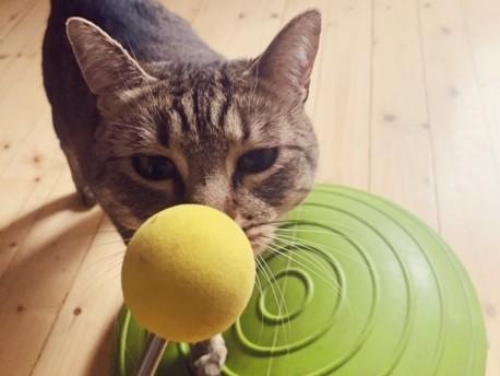 kissan kouluttaminen starttinappulalla