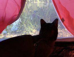 kissan kanssa telttailu