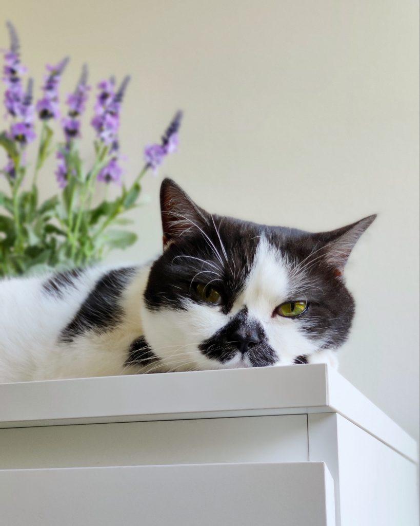 kissat osaavat rentoutumisen jalon taidon