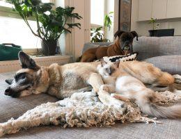 kissat ja koirat